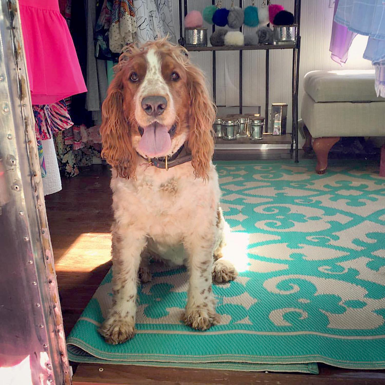 We love our sweet shop dog!